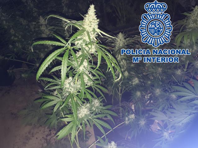 marihuana-barriada-de-la-paz-granada