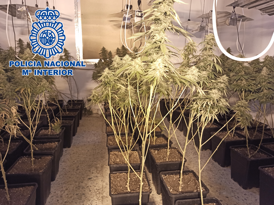 policia-marihuana