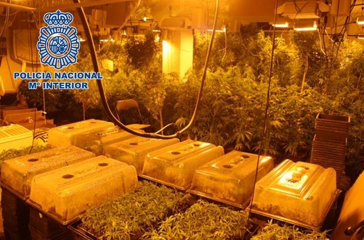 marihuana-cultivo-granada