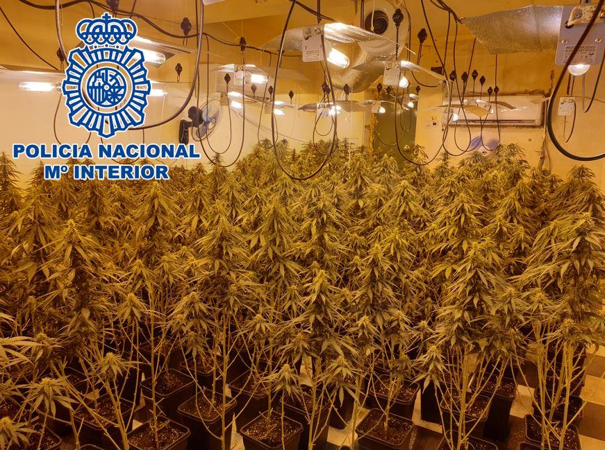 Marihuana-Op-Agosto